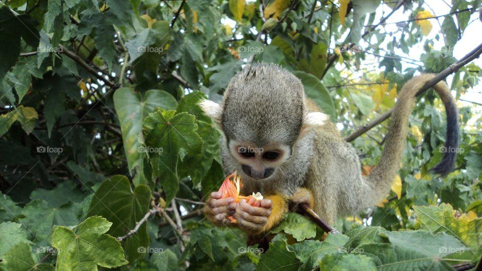 Mono bebé en naturaleza