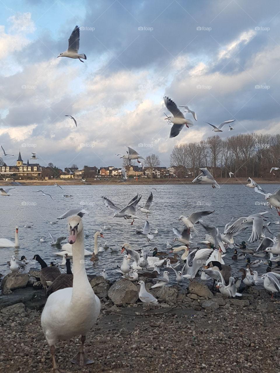 Tiere am Rhein Bonn