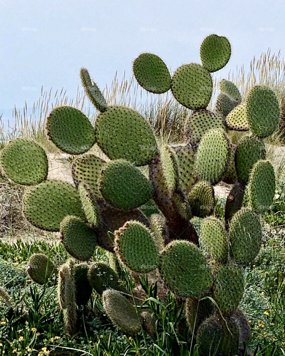 Cactus, Mickey Mouse Shapes