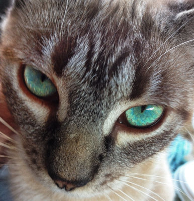 close face cat animal by analia
