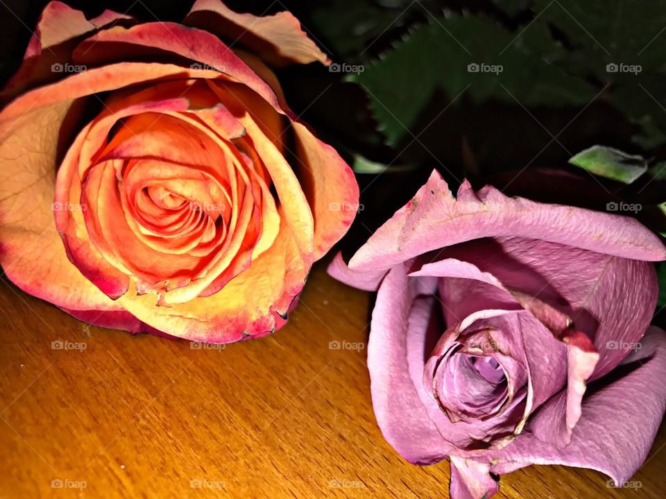 Two roses on wood