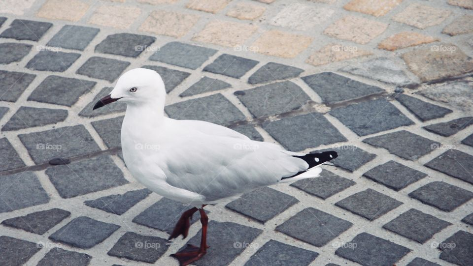 A seagull in the city_ colour version