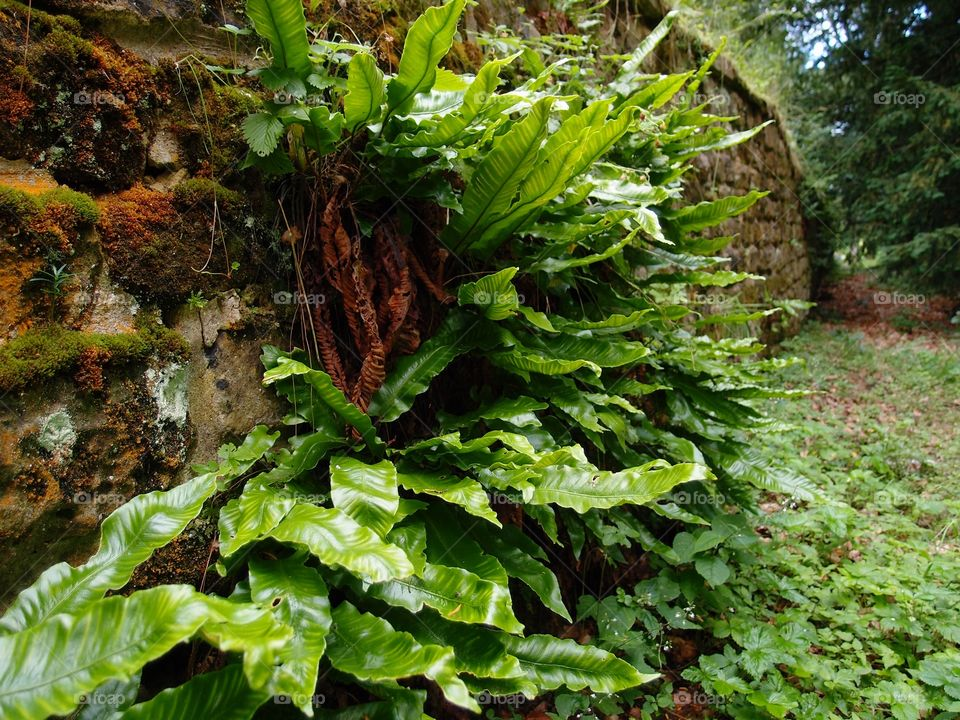 Large plant leaves grow from an old moss covered brick wall in the English countryside.