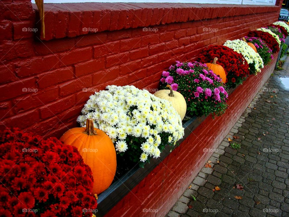A line of alternating mums and pumpkins along a red brick wall create a festive Fall vignette.