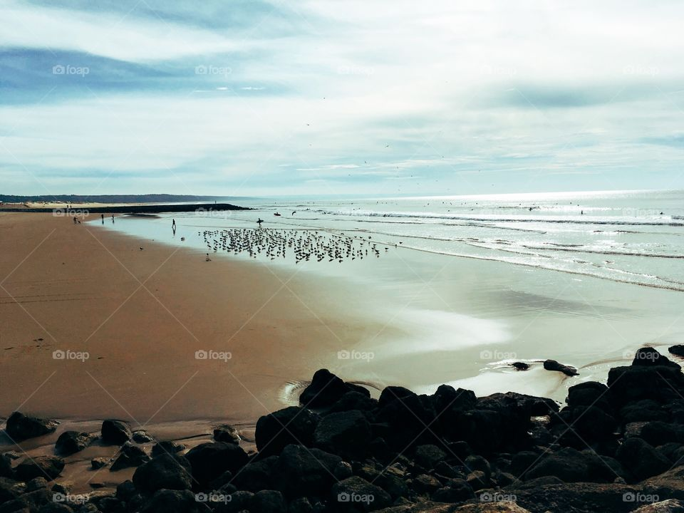 Flickr of birds in the beach. Autumn.