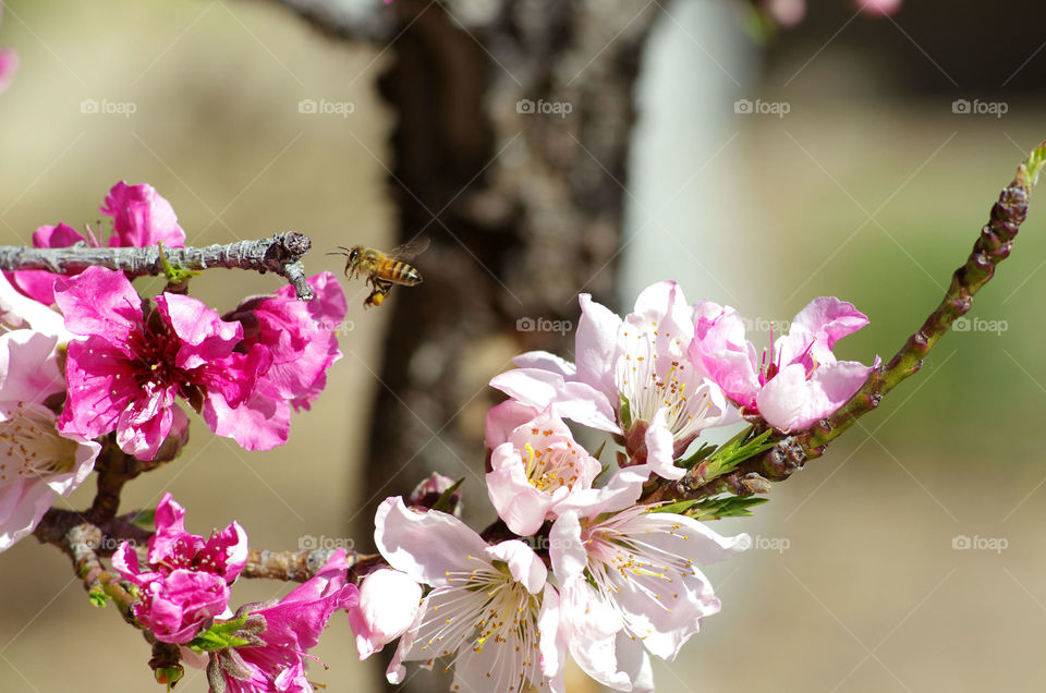 Bee flying near flower