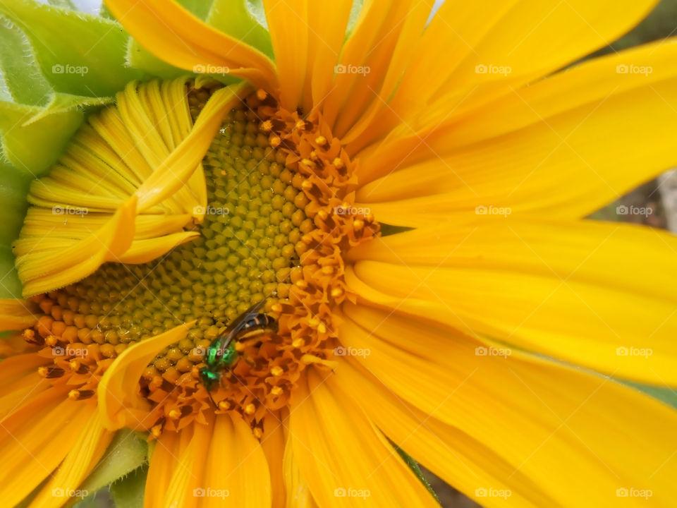 Feeding and Pollinating