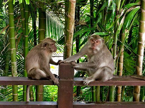 Close-up of a monkeys