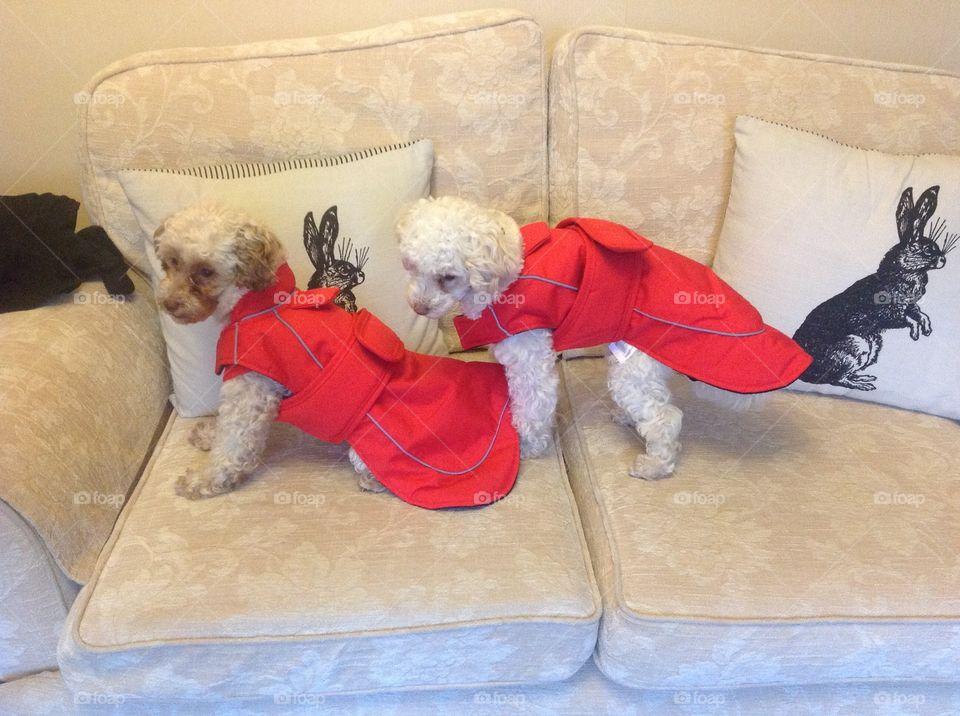 New coats