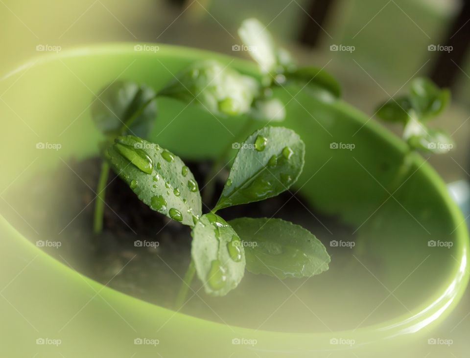 Plant seedling in green planter
