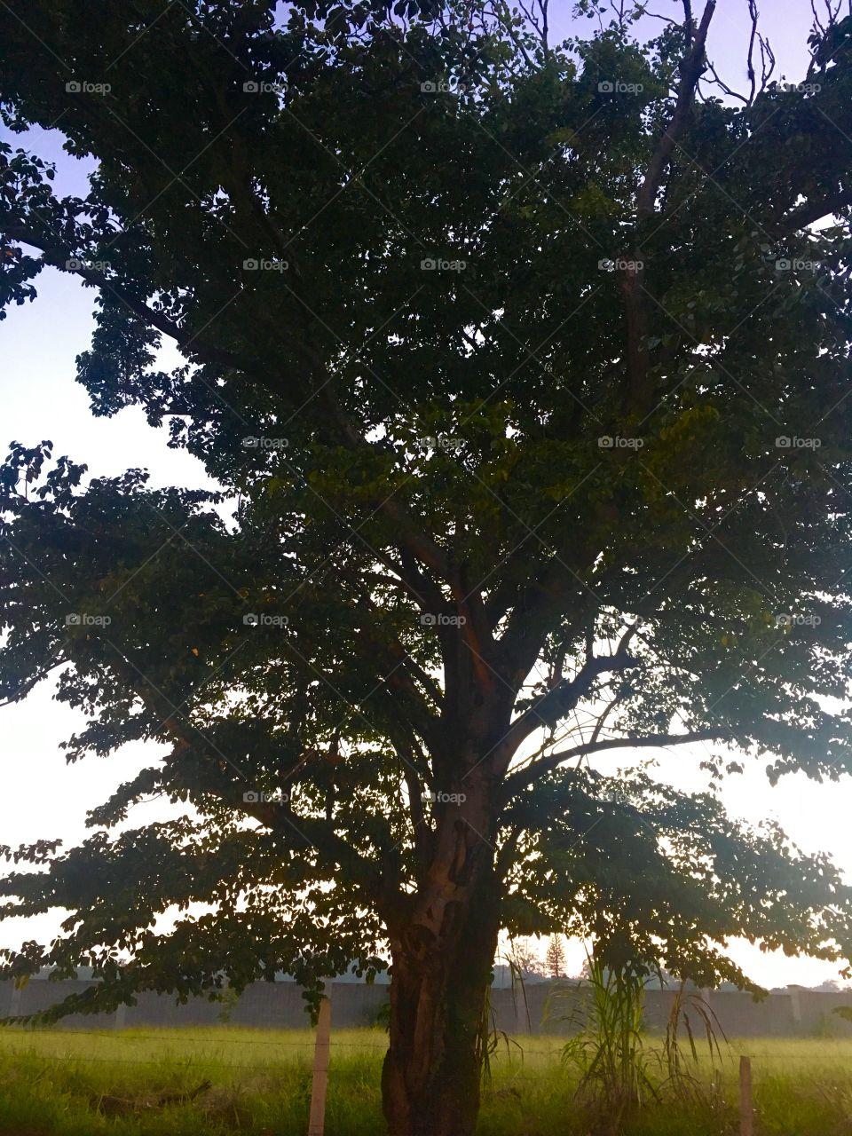 🌅Desperte, #Jundiaí! Ótima semana a todos. 🍃 #sol #sun #sky #céu #photo #nature #morning #alvorada #natureza #horizonte #fotografia #paisagem #inspiração #amanhecer #mobgraphy #mobgrafia #FotografeiEmJundiaí