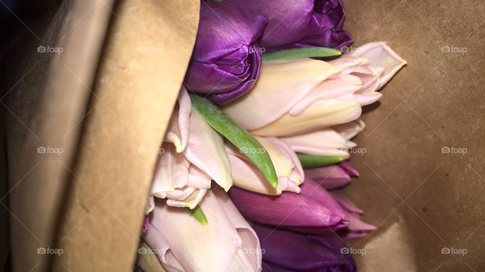 Flower, Wedding, Love, No Person, Nature