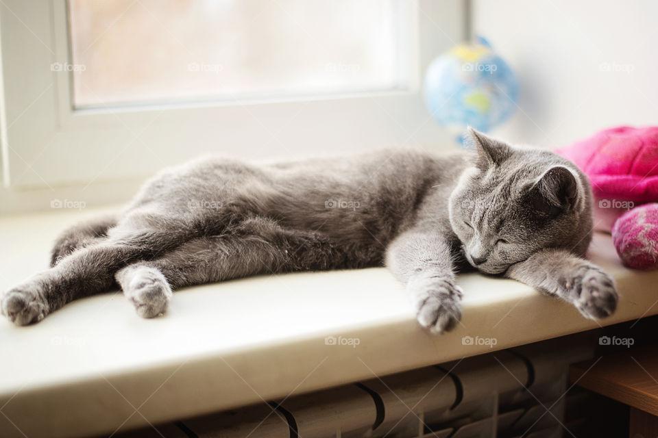 cat slipping on the window