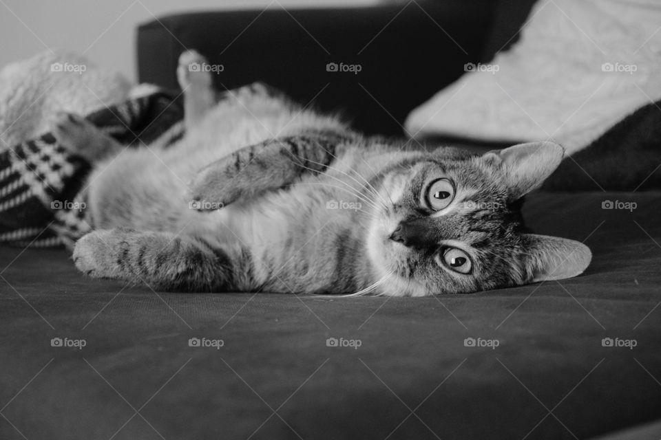 Black and white photo, cat
