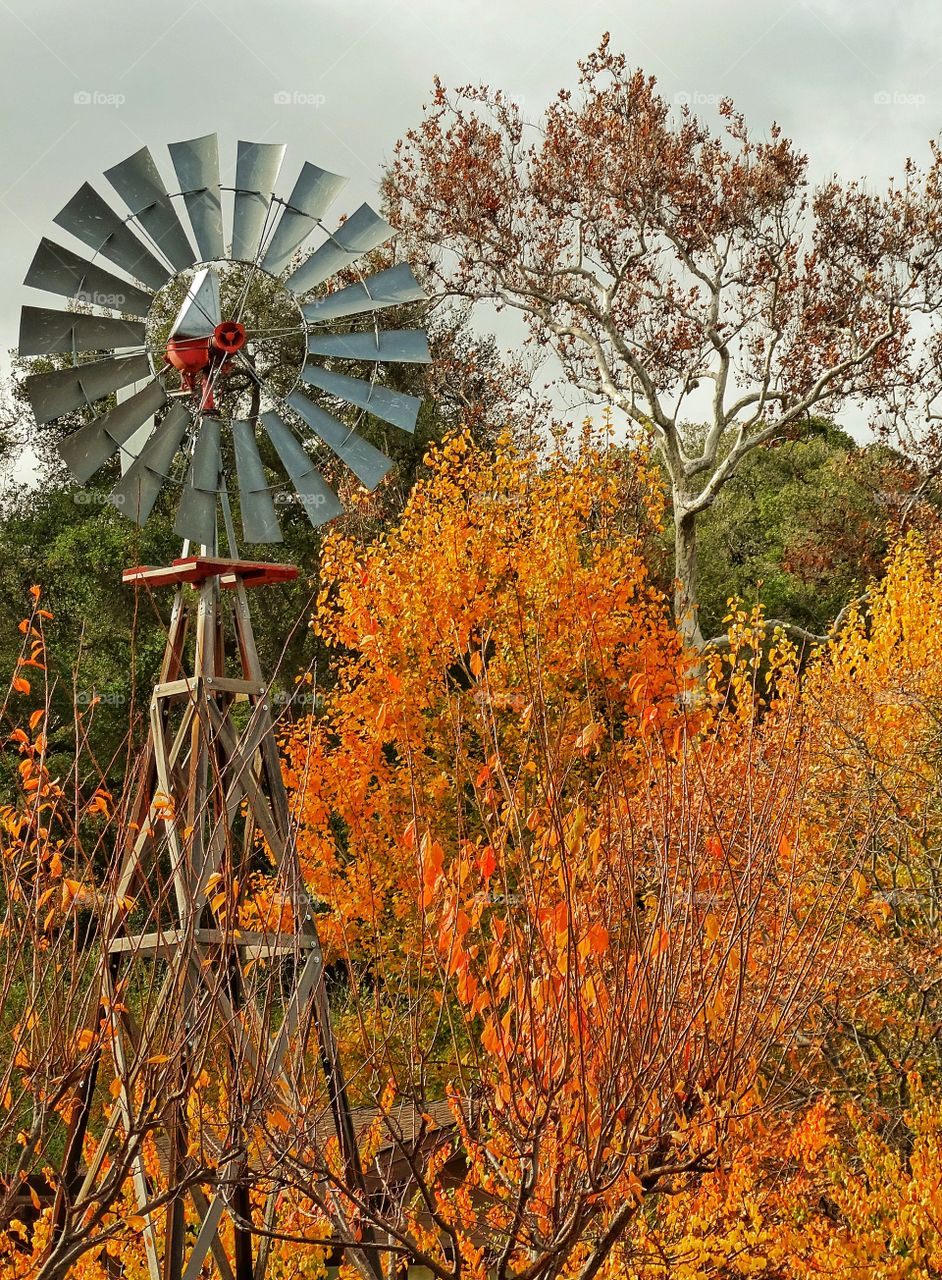 View of water pumping windmill with autumn trees