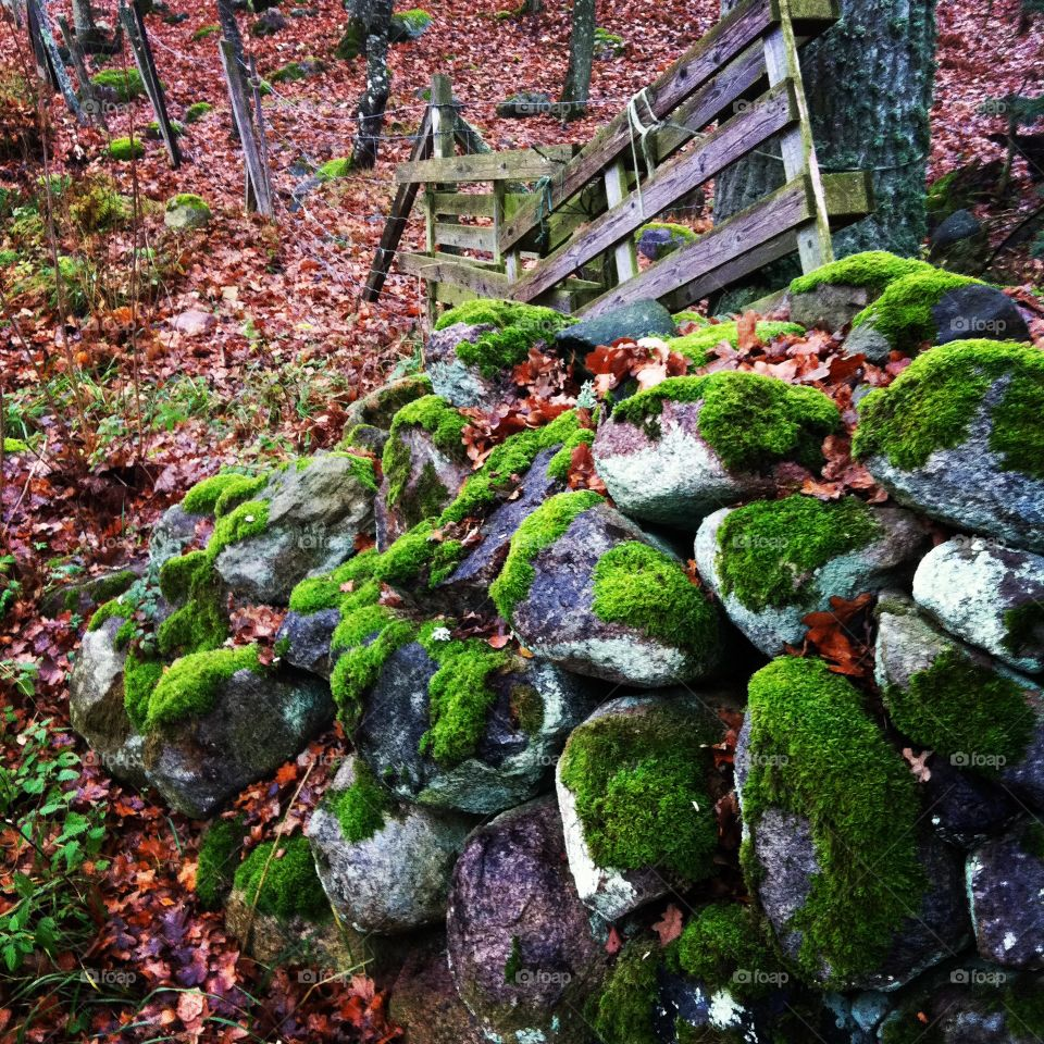 Swedish autumn