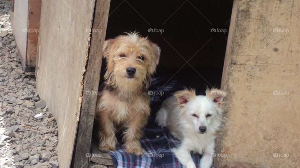 Dogs waiting for adoption