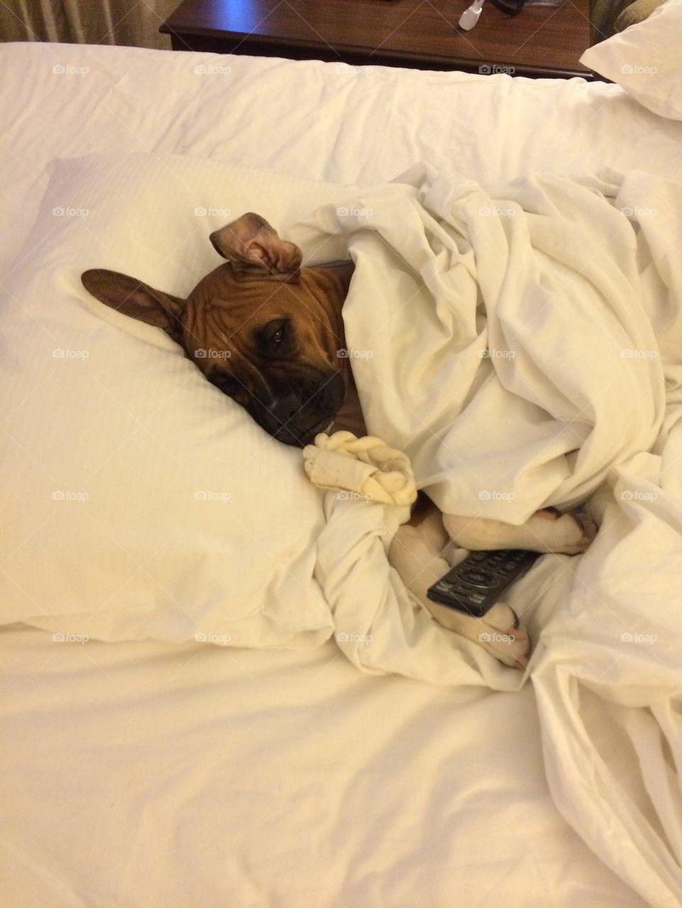 Dog lying on bed
