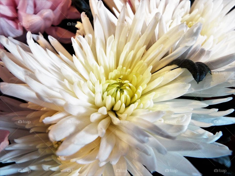 Macro shot white blooming flower