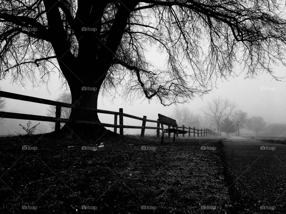 Black and white of a bench underneath the limbs of a mighty oak with a wooden fence on an eerie foggy morning at Lake Benson Park in Garner North Carolina, Raleigh Triangle area, Wake County.