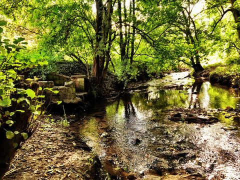 Riverbank with old stone steps in the woods