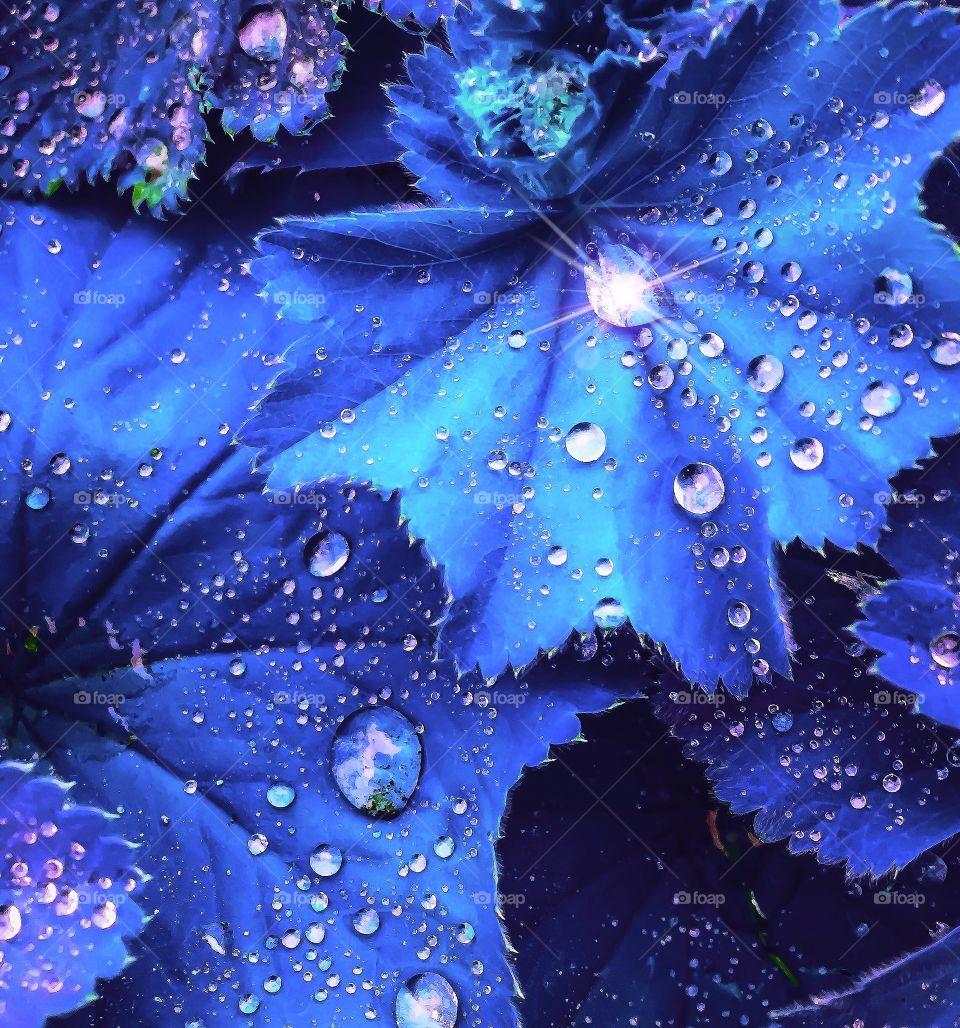 Extraterrestrial Plant