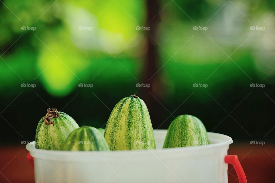 green cucumber healthy natural by munda.net