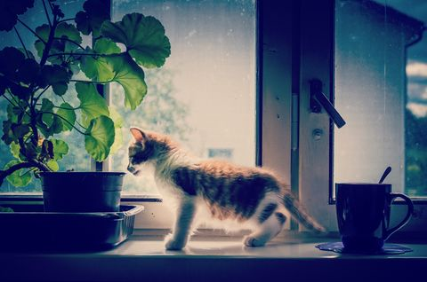 Kitten by a potted flower and coffee cup against the window