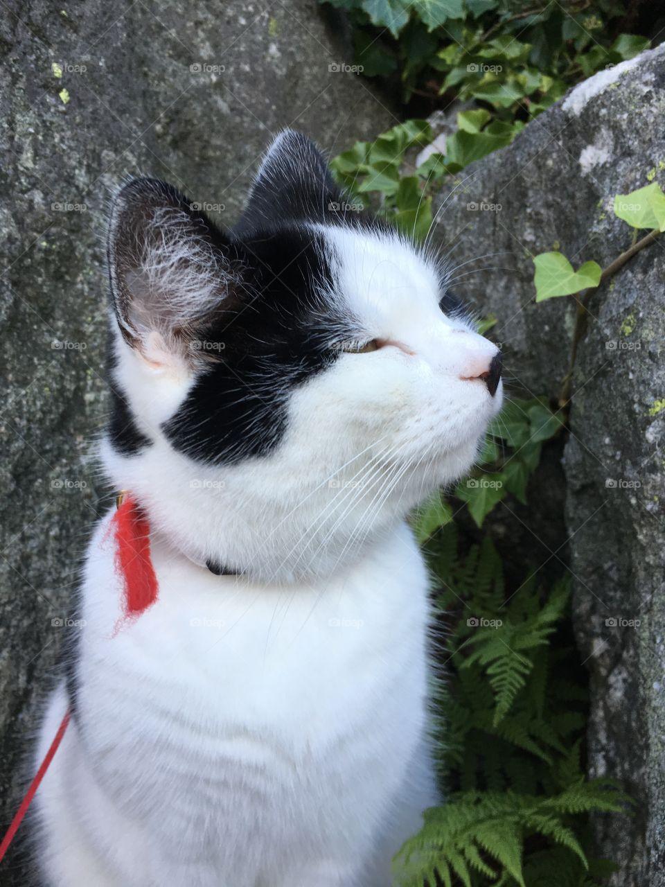 The cat Ester