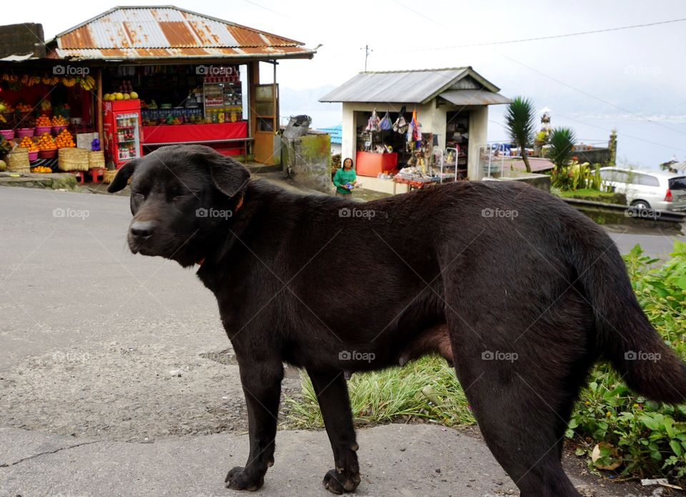 Street Dog in Bali totally Friendly and somuch warm bahave😘