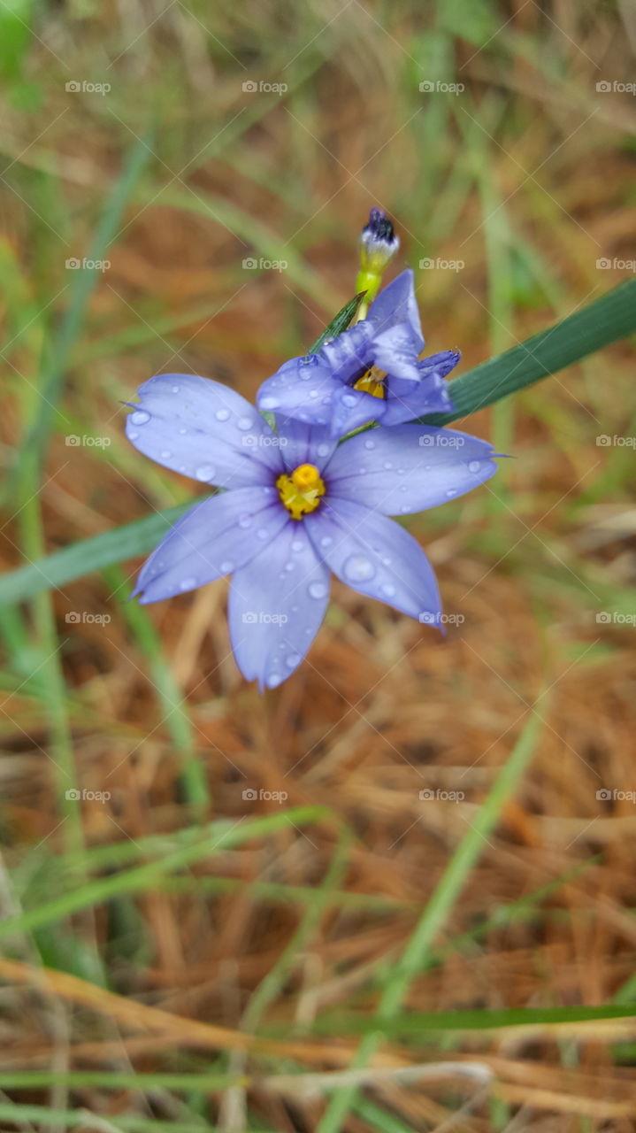 Water drops on purple flower