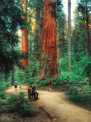 California redwood forest is spectacular!!