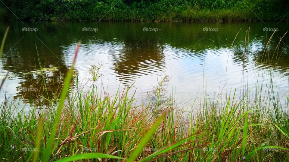 Landscape portrait - It's is check Dam water storage in rural area and surrounding beauty of nature.