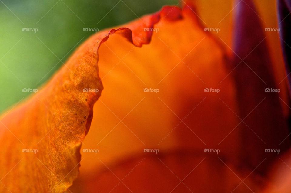 nature flower macro closeup by resnikoffdavid