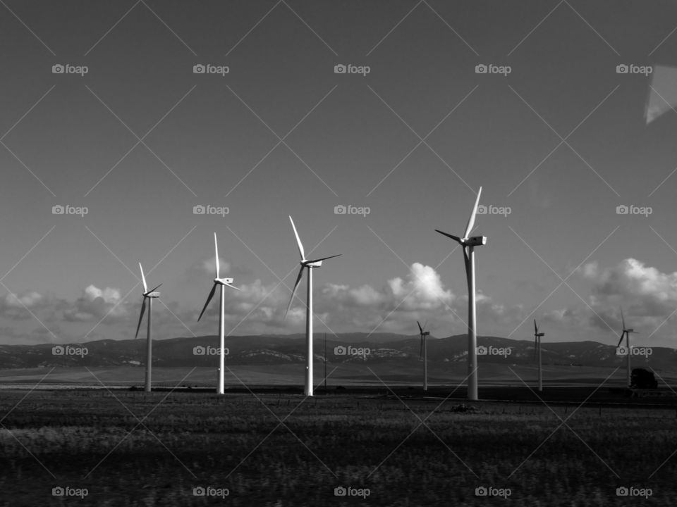Black and white shot of rural scene of environmental conservation in Andalusia, Spain.