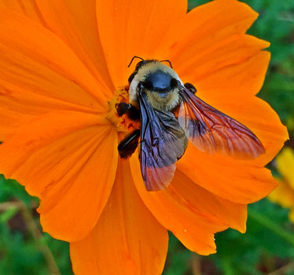 High angle view of bee on flower