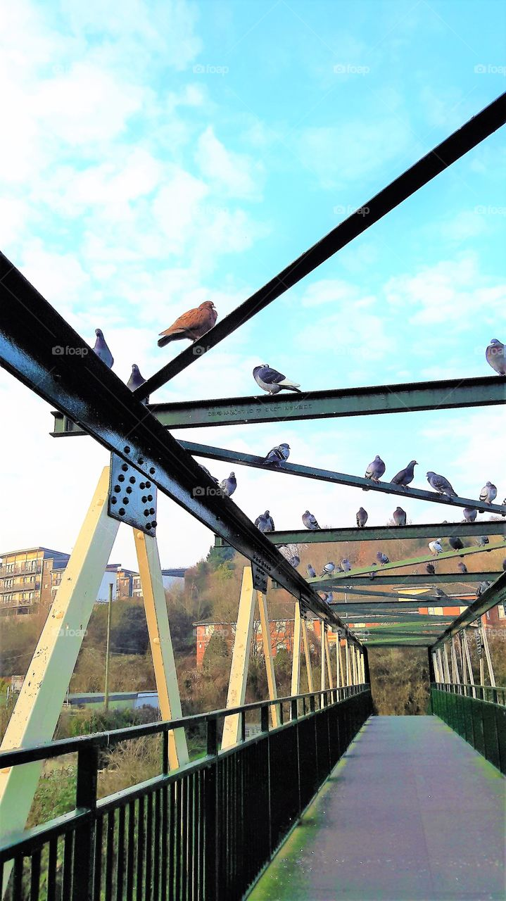 Birds on Bridge