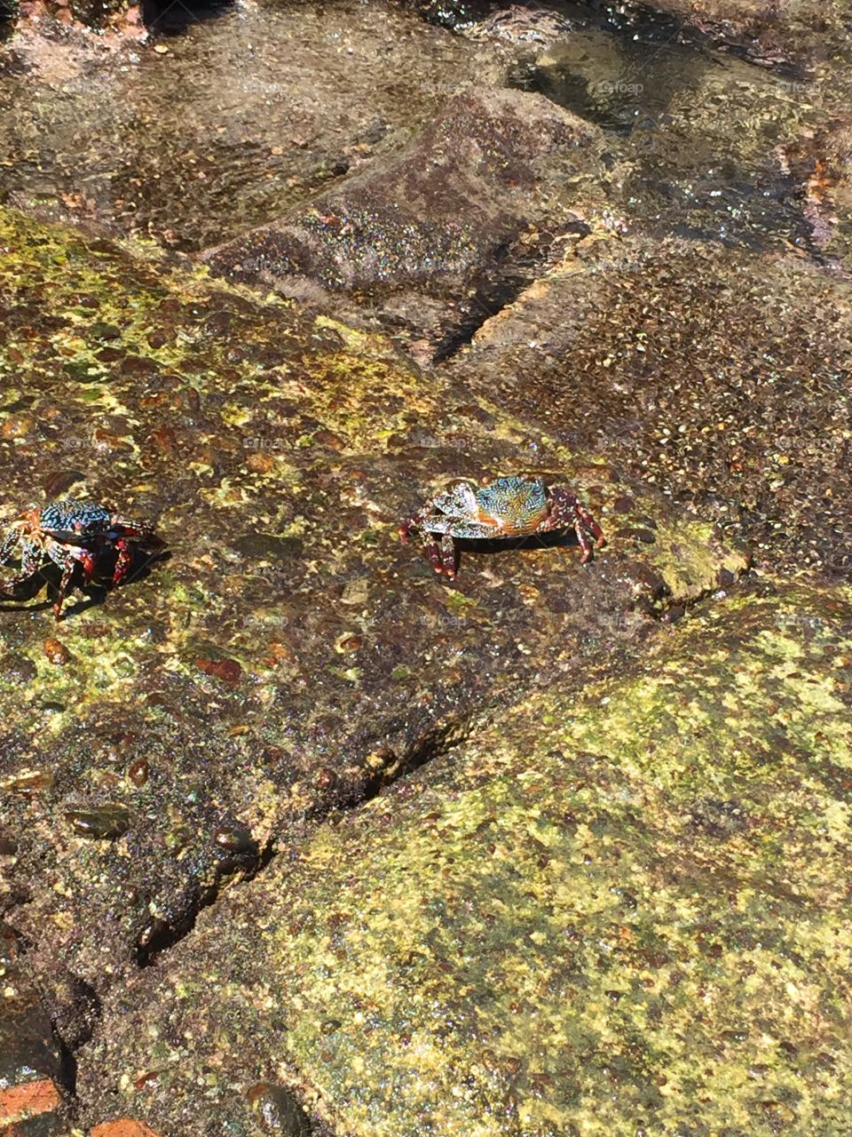 2 colorful crabs!!