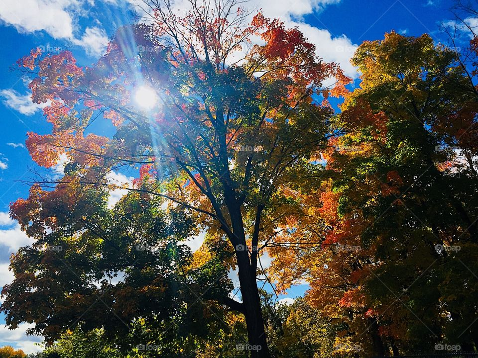 Sun shining through on a fall day