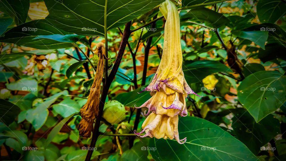 Plantas grandes com flores exóticas.