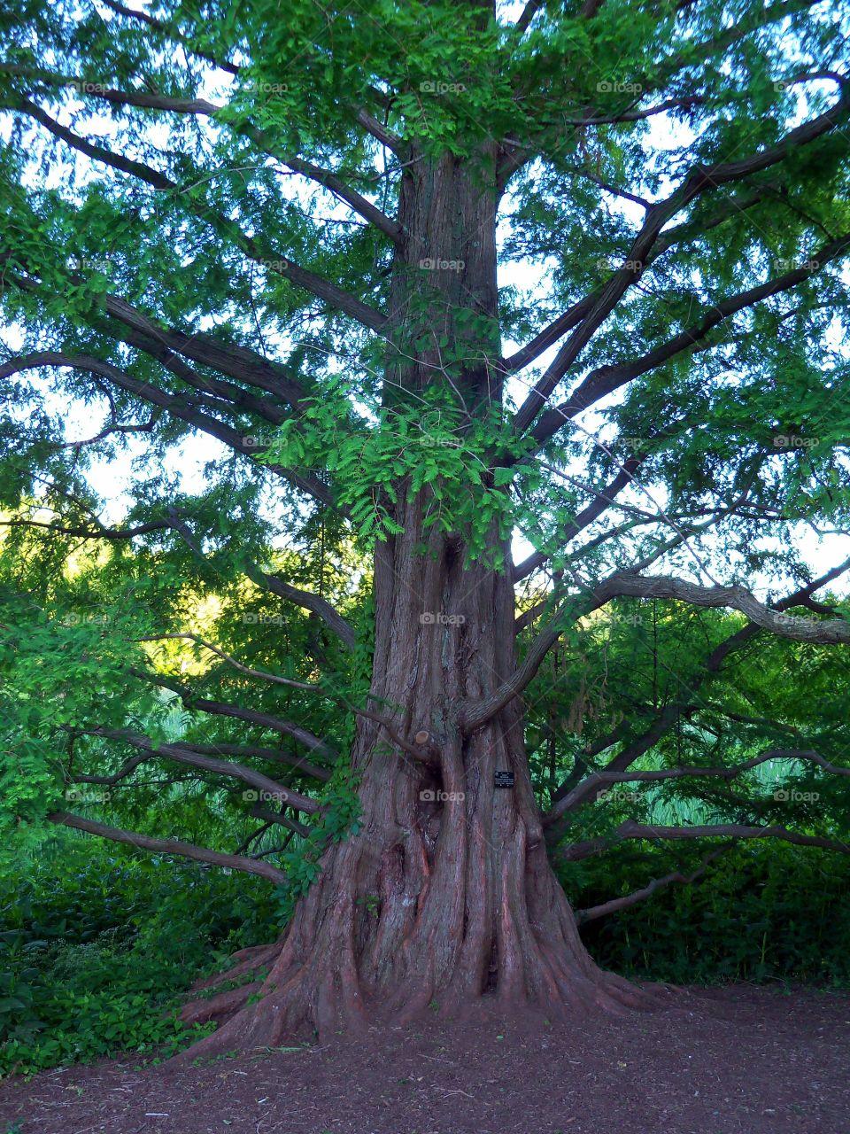 Tree in Arboretum