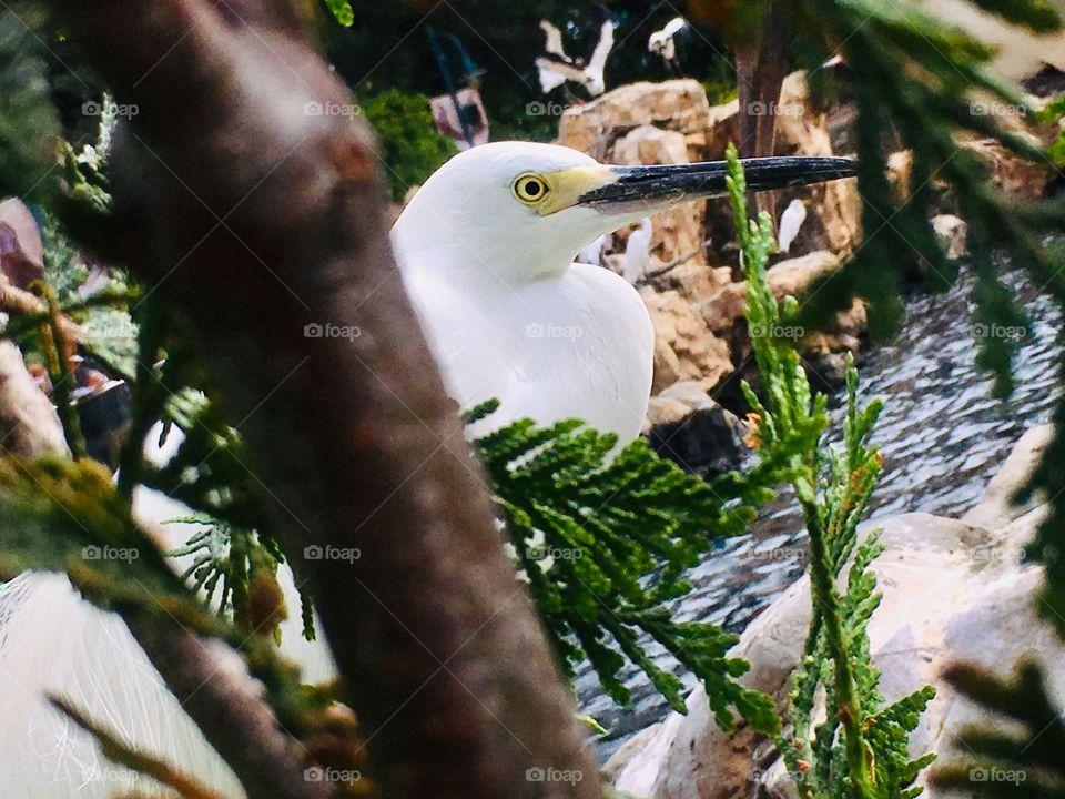 Peek a boo bird 🐦