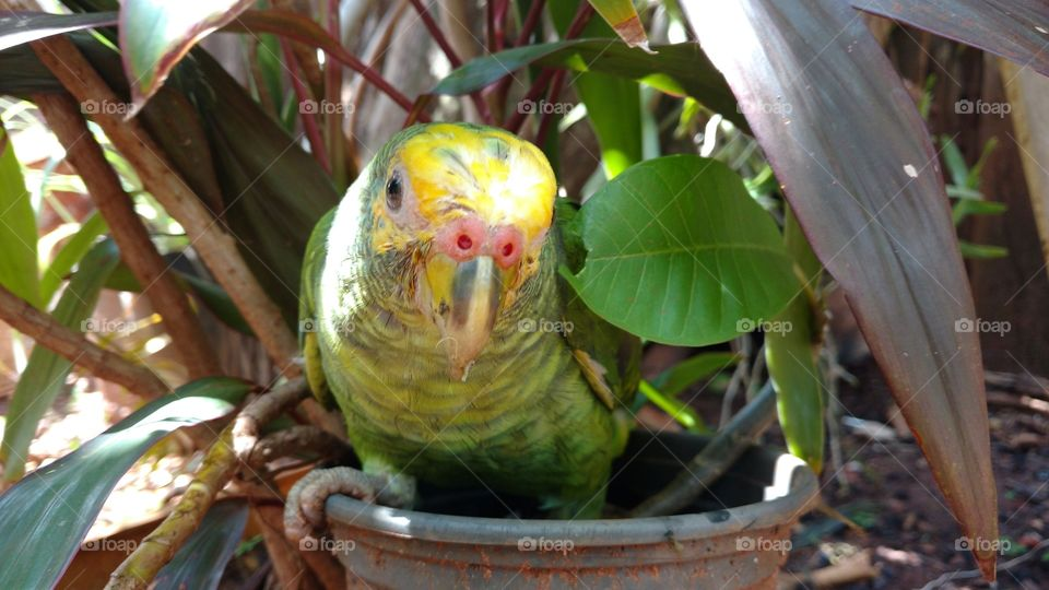 Parrot perching on potted plant