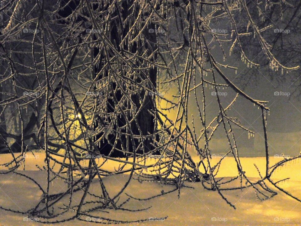 Frozen branches, ice storm
