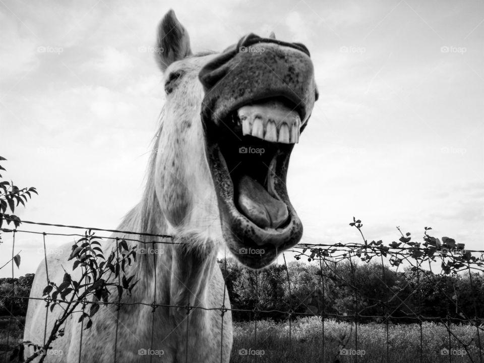 Happy Grey Laugh