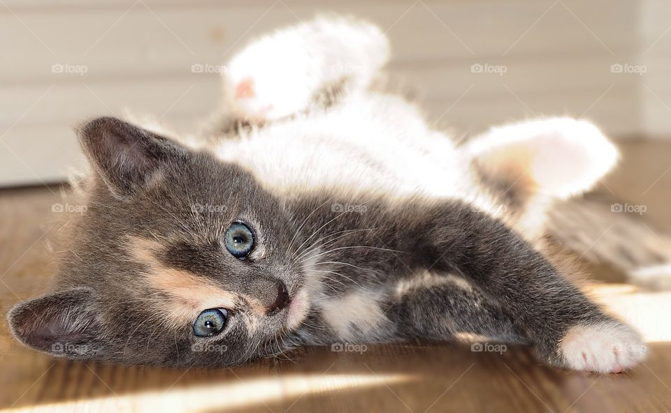 Young kitten lying down on floor