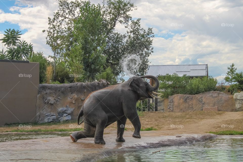 Baby Elephant: enjoying her first time at a deep pool