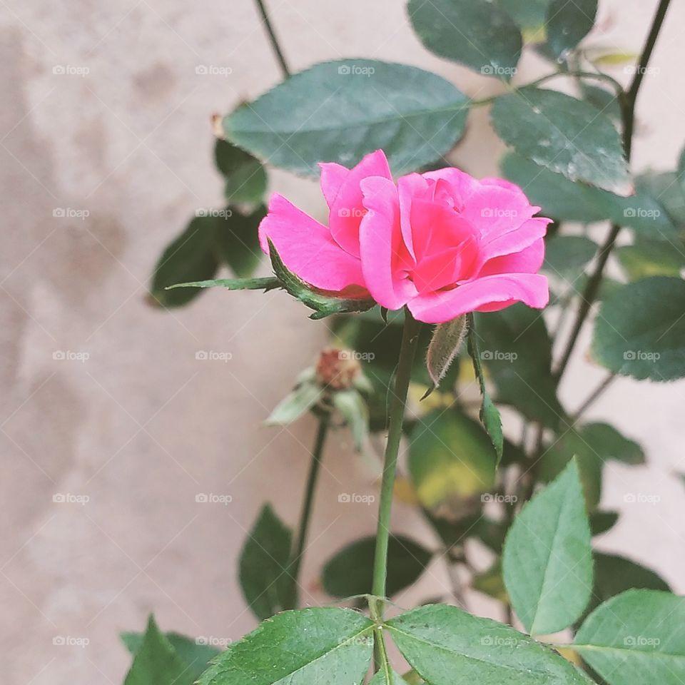 Rega-te com flores e floresça todas as manhãs.