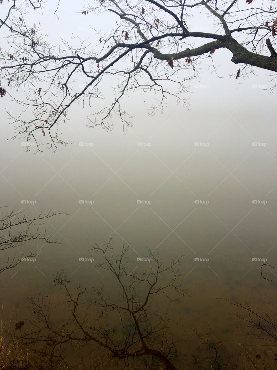 Mirror reflection of a barren tree branch on the placid surface of the water at a lake in North Carolina on a foggy morning