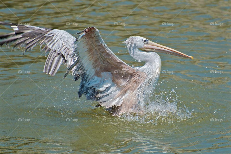 Close-up of bird swimming
